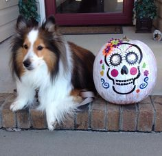 Sheltie with cute painted Pumpkin