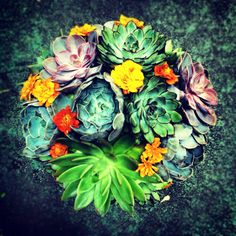 Succulents and Marigolds