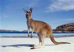 Someday I will travel to Australia!