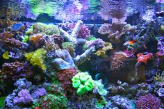 saltwater reef tank. I can't wait for our tank to look like this