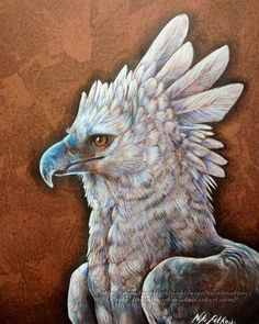 Harpy Eagle by Rainbow-Foxy