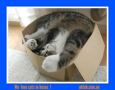 Cat in a box 1 Follow us on facebook/abfabremovals