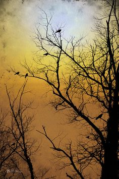 Under Strange Skies Photograph  - Under Strange Skies Fine Art Print