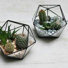 Terrariums Succulent Ideas, Living Walls, Cactus Decor, Perfect Plants, Glass Terrarium, Air Plants, Decoration, Greenery, Stained Glass
