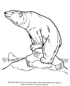 Polar Bear Coloring Sheets And Pictures