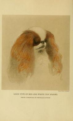 Toy dogs and their ancestors, including the history and mangament of toy spaniels, Pekingese, Japanese and Pomeranians, - Biodiversity Herit...