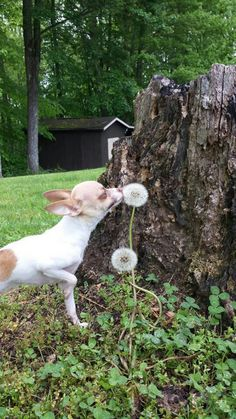 Ah, yes...it is always good to stop and smell the the odd round plant things!