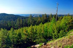 A view overlooking the Ochoco Mountains from Forest Road 27. (Photo No. croDA0016)