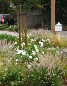 grasses and roses. grasses and roses.grasses and roses. Landscaping With Roses, Front Yard Landscaping, Landscaping Ideas, Backyard Ideas, Plant Design, Garden Design, Red Fountain Grass, Drift Roses, Grass Edging