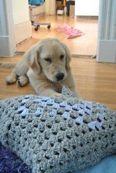 Puppy vs. Crochet Pillow