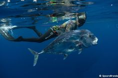 Florida Gets A Professional Spearfishing League