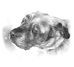 COPYRIGHT 2016 All images contained on this web site are under copyright protection by RYAN DOUGLAS JACQUE and may not be reprinted, copied or used in any manner without the prior written consent. Dog Portraits, Dog Art, Wildlife, This Or That Questions, Graphite, Dogs, Artist, Pencil, Animals