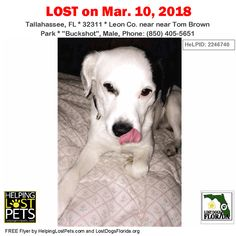 Have you seen this lost dog?  #LOSTDOG #Buckshot #Tallahassee (near Tom Brown Park) #FL 32311 #Leon Co.  #Dog 03-10-2018! Male #Unknown White / Black/ //  Phone: (850) 405-5651  More Info Photos and to Contact: https://ift.tt/2HVCi2j  To see this pets location on the HelpingLostPets Map: https://ift.tt/2pza8TQ  Let's get Buckshot home! #lostdogsflorida #HelpingLostPets