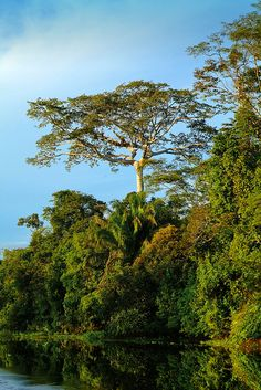 Amazon Jungle - Peru. Want to visit the jungle RESPONSibly staying with local families? RESPONSible Travel Peru: http://www.responsibletravelperu.com/ #RESPONSibleTravelPeru #Jungle #Peru