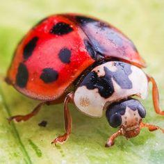 Awesome bug prints for boys!