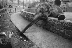 Garry Winogrand The Animals, Bronx Zoo, 1969. From the book The Animals - Garry Winogrand. The Museum of Modern Art, 1969.