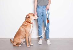 Design products for dogs: Dog collar | Dog Leash | Dogwastebagdispenser