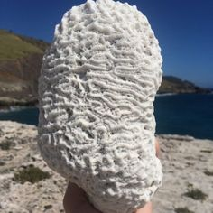 All our Fossils are Authentic Surf Tumbled from the Beautiful beaches of the Caribbean! Well over 400 Million years Old! Inbox if interested for information. Salt Water Fish, Salt And Water, Brain Coral, Aquarium Fish Tank, Handmade Shop, Handmade Gifts, Coastal Decor, Fossils, Beautiful Beaches