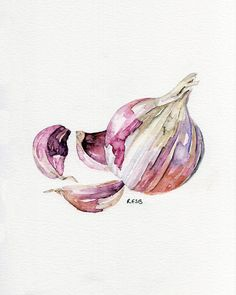 "Garlic Painting - Print from Original Watercolor Painting, ""Garlic Clove"", Kitchen Decor, Red Garlic"