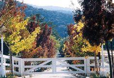 simple wood gate entrance