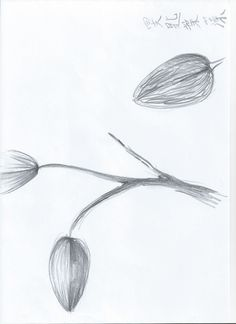 Sketch_Kelp29