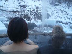 地獄谷温泉 長野   Ngano Jigokudani Hot Spring with monkey