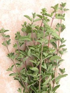 "Marjoram - ""Has a more mild, sweet flavor than oregano with perhaps a hint of balsam. It is said to be ""the"" meat herb but compliments all foods except sweets. Common to Mediterranean and Middle Eastern foods, marjoram is grown domestically and imported mostly from Egypt. Consider it a natural for meat dishes but don't hesitate to use marjoram to season vegetables served cooked or raw, fish and chicken or dishes with eggs and/or cheese. It is especially good along with other herbs in beef…"