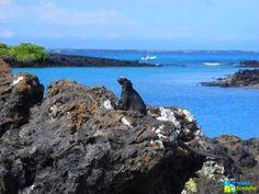 """Islotes de las tintoreras, Isla Isabela, Galapagos, Ecuador : Islotes de las tintoreras, se encuentra a 10 minutos en lancha de Puerto Villamil, es un pequeño islote rocoso.    Llamado así ya que existe una grieta de lava con agua tranquila y transparente donde suelen ir a descansar los tiburones de aleta punta blanca, llamados """"tintoreras"""" y que se observa con facilidad por las mañanas y las tardes. En las paredes verticales de las grietas y la pequeña lagu"""