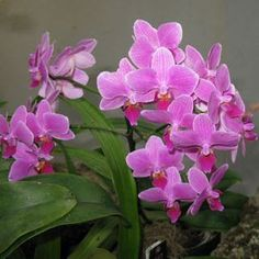 12 Tropical Plants Ideal for Growing Indoors: Orchids