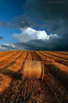 Late summer harvest near Forres, on the Moray coast, Scotland.