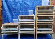 Chicken Incubator, Quail, Shelves, Birds, Home Decor, Animals, Backyard Chicken Coops, Quails, Ideas