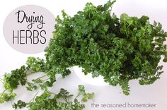 How to Dry Herbs - The Seasoned Homemaker