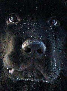 Beast View - by Vasiliy V.Rechevskiy - Pixdaus  # What a sweet face!!