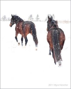 """""""When Mahal realized that Finn would not show up for chores in a storm like this, she bundled up and moved Wind and the four other horses from the corral into the barn ...""""   The Bachelor Farmers by Brenda Sorrels www.brendasorrels.com"""