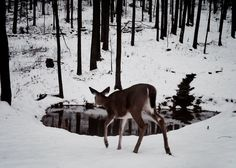 Doe | The North Realm