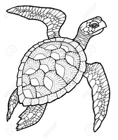 51356895-sea-turtle-line-art-vector-stylized-drawing-Stock-Vector-tattoo.jpg (1097×1300)