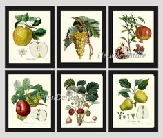 Fruit Print Set of 6 Botanical Art Print 8X10 Poiteau Antique Apple Strawberry Grapes Pomegranate Chart Summer Plant Garden Nature to Frame