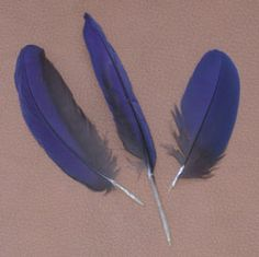 """Macaw Feathers 