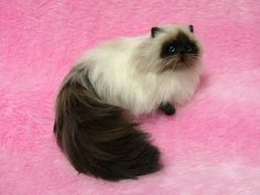 Needle Felted Seal Point Himalayan Cat: Miniature Needle Felt Cat, Needle Felting by LilyNeedleFelting, ¥57000