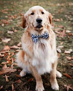 Bow ties for dogs Preppy Christmas, Christmas Photos, Family Christmas, Preppy Baby Boy, Dog Bows, Family Pictures, Little Boys, Bow Ties, Classic
