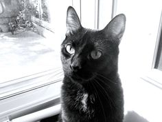 cat breeding games | Cute Cats Pictures