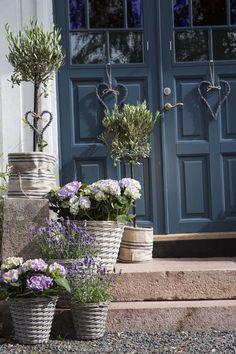Pynt på trappen med hortensia, lavendel og oliventre
