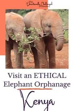 """""""Want to see baby elephants in Kenya? Not sure how to do it ethically? Here's how! The Sheldrick Wildlife Trust does incredible work rescueing and releasing orphans - here's everything to know for planning your trip! Things to do in Kenya / See elephants ethically / Ethical elephant orphanage """" Sheldrick Wildlife Trust, Kenya Travel, Baby Elephants, Wildlife Conservation, Nairobi, Animals Of The World, Orphan, Plan Your Trip, Where To Go"""