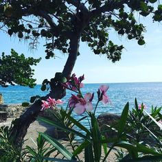 Happy Monday from LBC! . #staylittlebay #littlebay #littlebaycabins #jamaica #Negril #westmoreland #travel #beach #vacation #deals #deal #sea #ocean #sun #waves #swimming #travelgram #funinthesun #reggae #irie #rasta #praisejah #negriljamaica #jamaicabeach #nature #traveling #tourism #wanderlust #destination #adventure #pinterest #instagram #ifttt