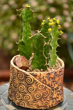 Euphorbia pseudocactus in Susan Aach pot by Pat Enderly 3/26/15