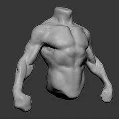 Follow us 👉 @zbrushtuts  Male torso study by Niyazi Selimoğlu @nyzslmgl (Character Artist / Digital Sculptor) Artstation:… Human Anatomy Drawing, Anatomy Study, Body Drawing, Anatomy Art, Zbrush Anatomy, Drawing Faces, Drawing Tips, Drawing Hair, Gesture Drawing