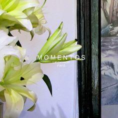 Deco lanzamiento fw15 Deco, Plants, Decor, Deko, Plant, Decorating, Decoration, Planets
