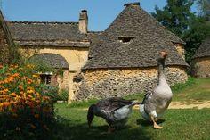 Le Périgord - Aquitaine région       ..kurier.at