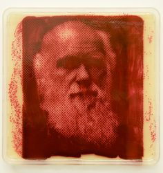 Using a similar process, Copfer created portraits of scientists and artists who have inspired him, such as Charles Darwin, shown above. To create these he grew the red bacterium Serratia marcescens.