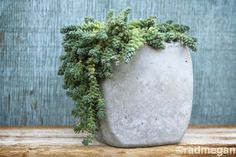 Making Concrete Molds for Planters | 28 comments 9 Cool Things you Should Make with Cement this Weekend by ...